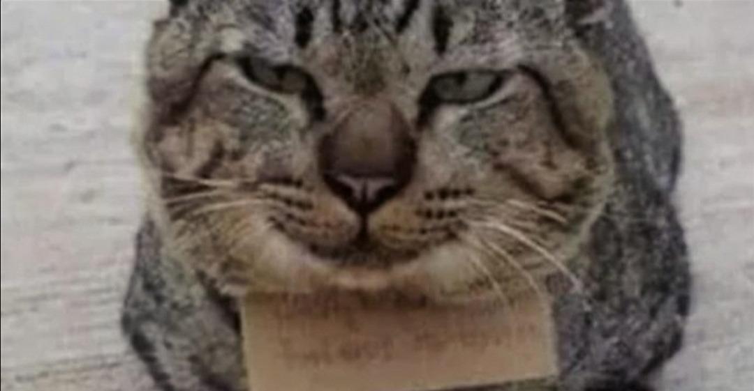 gatto-scontrino