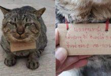 gatto-thailandia-scontrino
