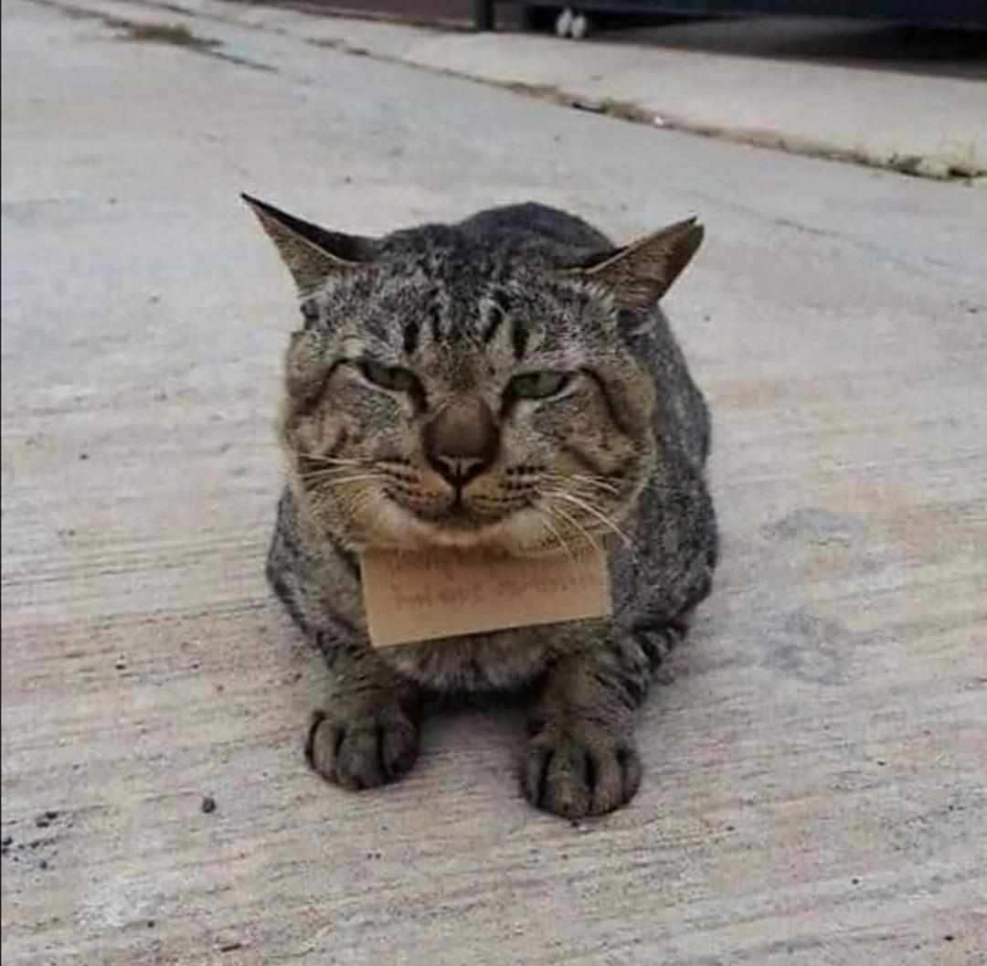 gatto-thailandia-scontrino-pesce