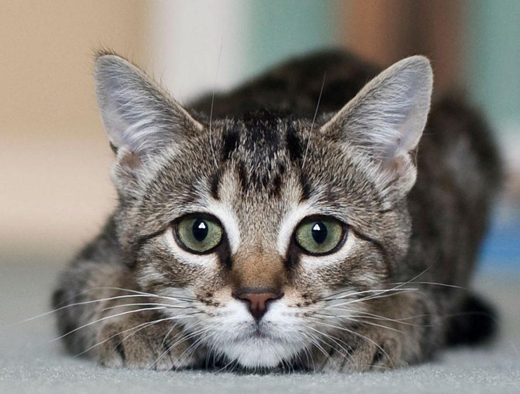 M-fronte-gatto