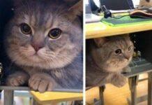 ba-dun-gatto