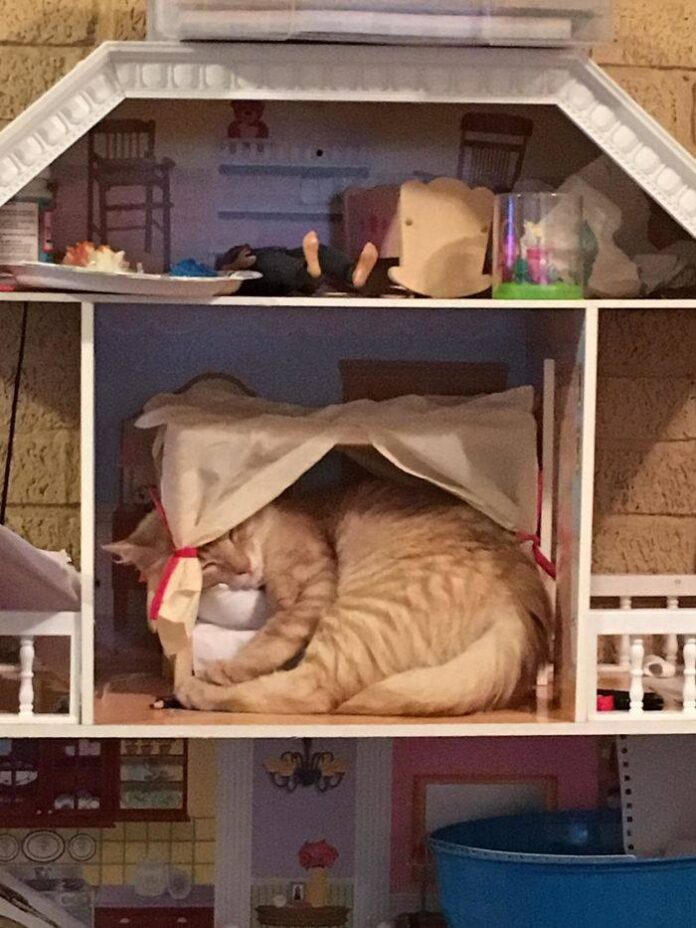 gatti dormono posti strani 6