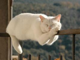 gatti leggi gravità copertina
