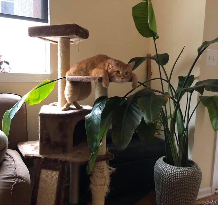 gatti posizioni strane 2