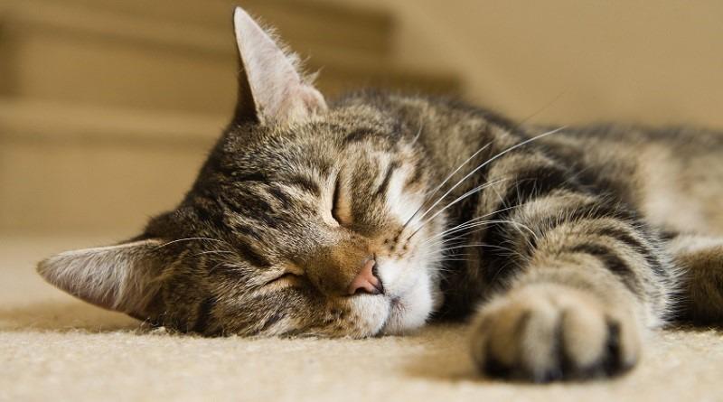 gatto-M-fronte-micio