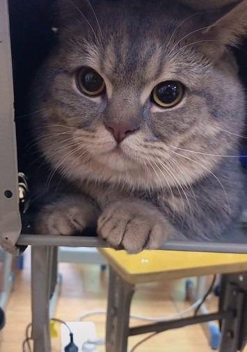 gatto-cina-universita