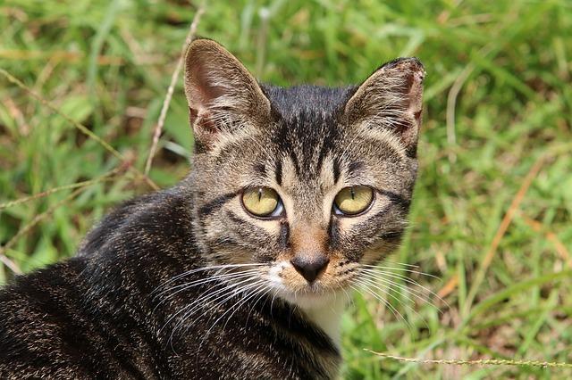 gatto-leggenda-m-fronte