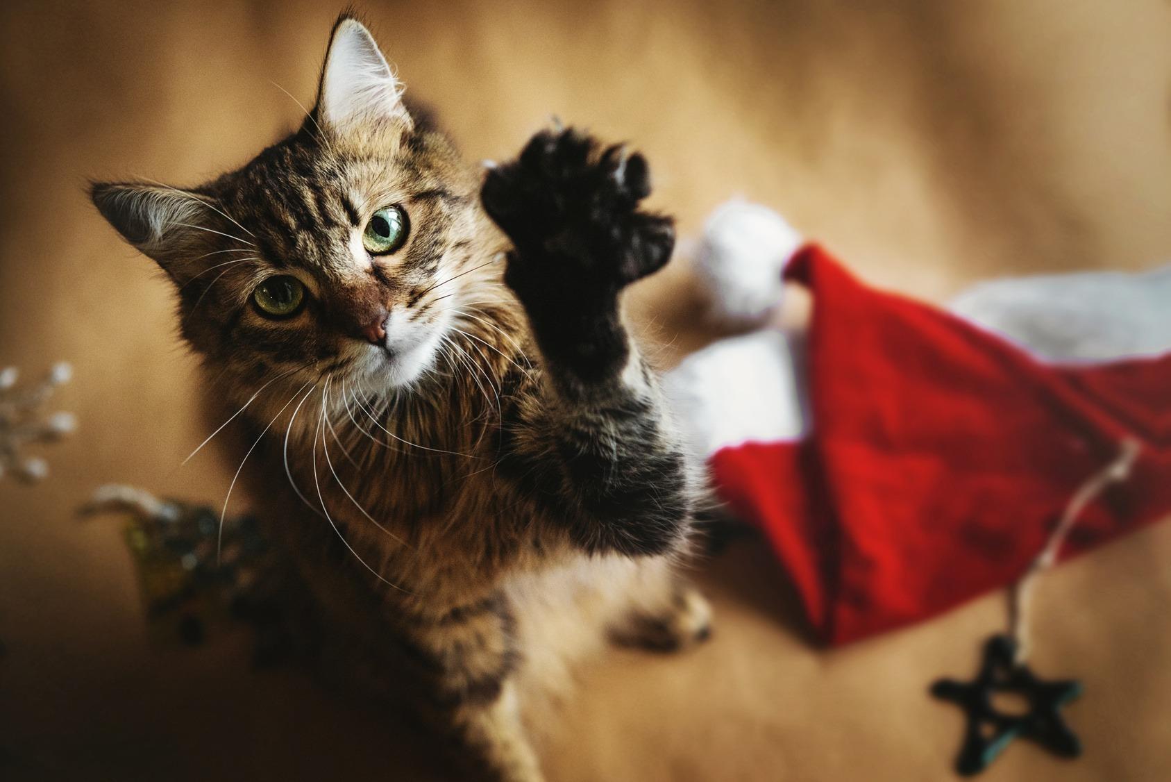gatto-leggenda-natalizia
