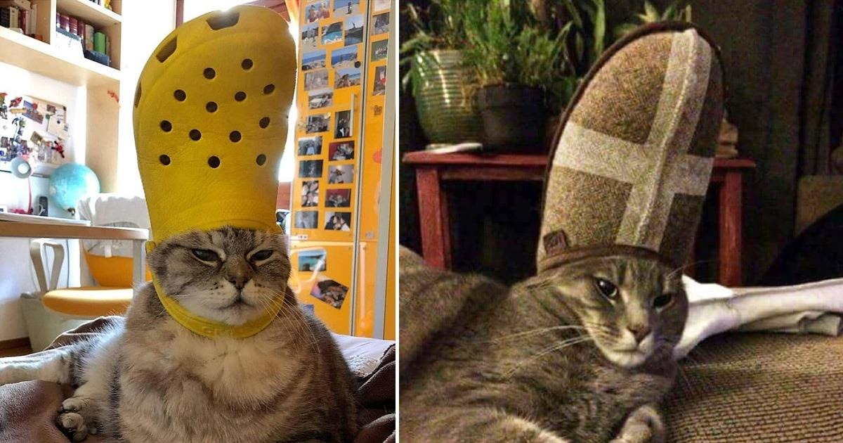 gatto papa pantofola