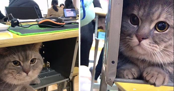 gatto-universita-banco