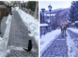 gatto e cervo